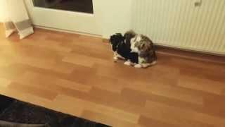 Bonnie & Clyde - Bonnie wird weggekickt (Kaninchen rammeln) lustig/funny