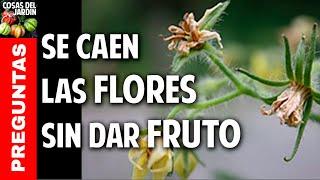 Se caen las flores del tomate? Soluciones @cosasdeljardin