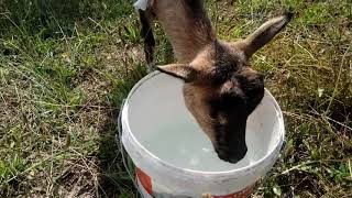 Vlog#2 kozy na trawie