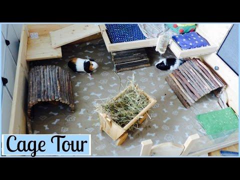 Guinea Pig Cage Tour | Summer 2016