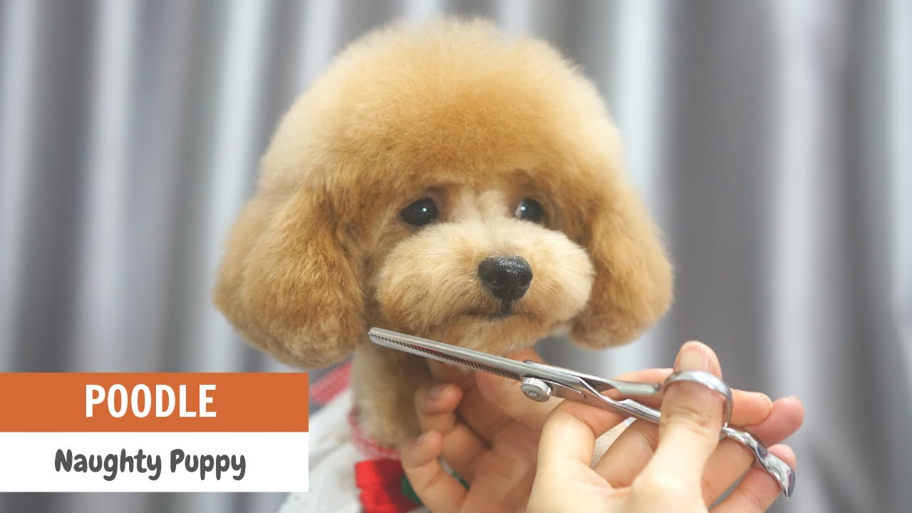 GROOMING and HANDLING ACTIVELY MOVING PUPPY Learn Tips and Tricks | ASIAN CUTE DOGS