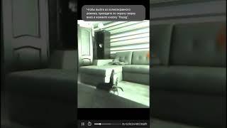 . Карликового пинчера сняли на скрытую камеру воет на телефон
