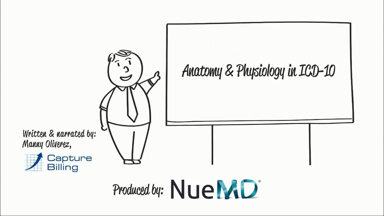 ICD-10 Basics: Anatomy & Physiology - YouTube