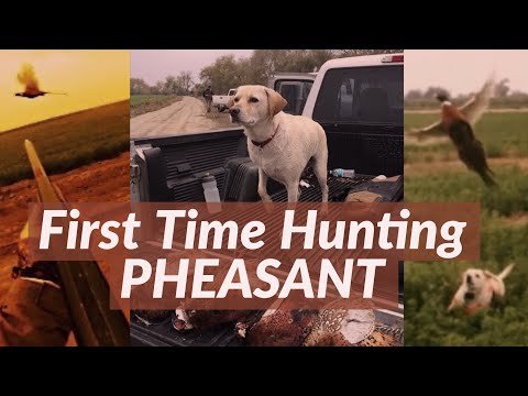Pheasant Hunting California Public Hunts