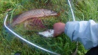 Рибалка на р. Луга . Зловив щуку на живця без гачка на снасть фідер.