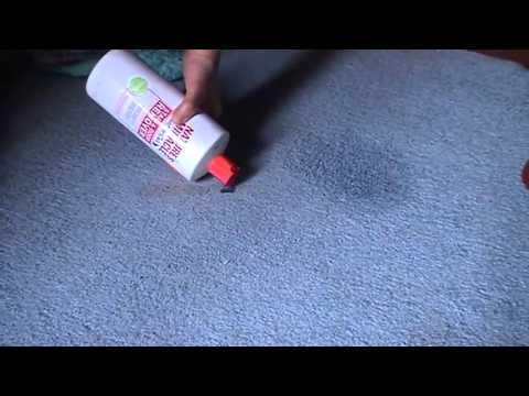 best laundry detergent for removing cat urine