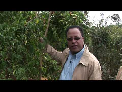Ethiopia Tadesse Promoting Harar Coffee