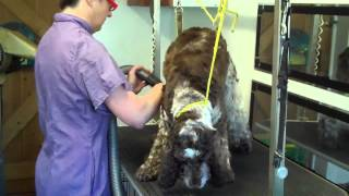 Caring Quality Grooming For Pets