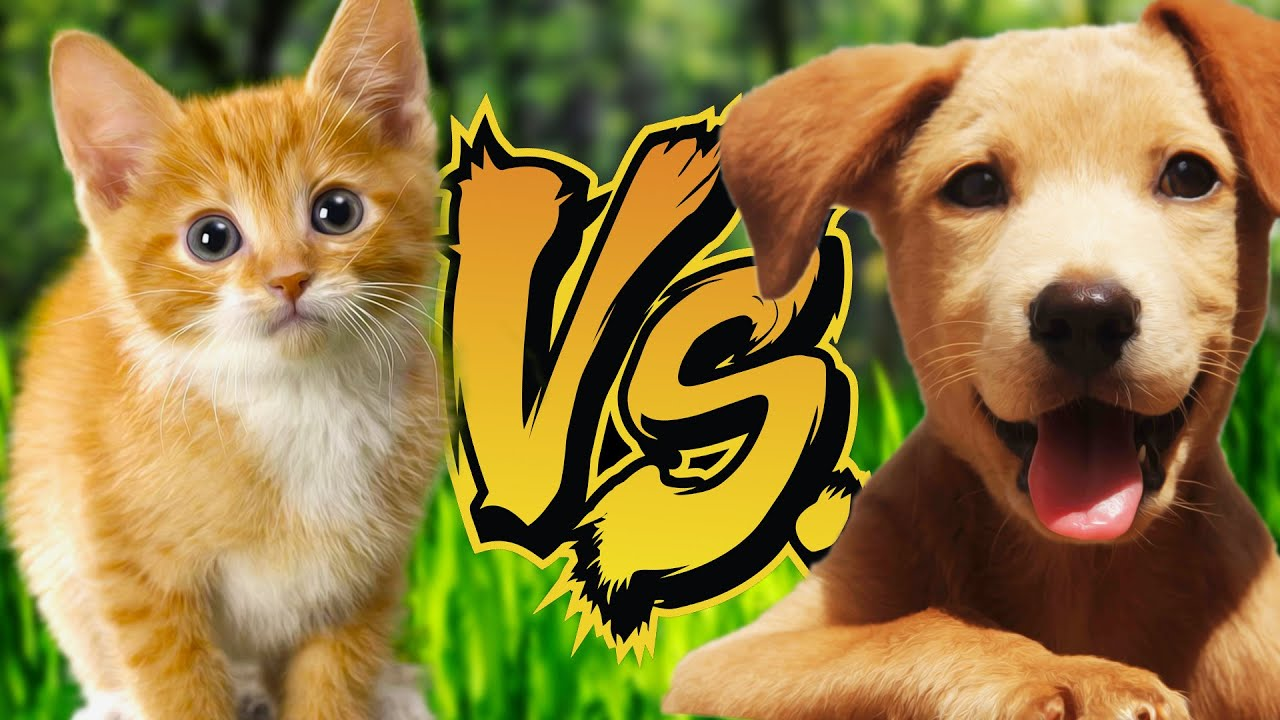 KITTENS VS PUPPIES