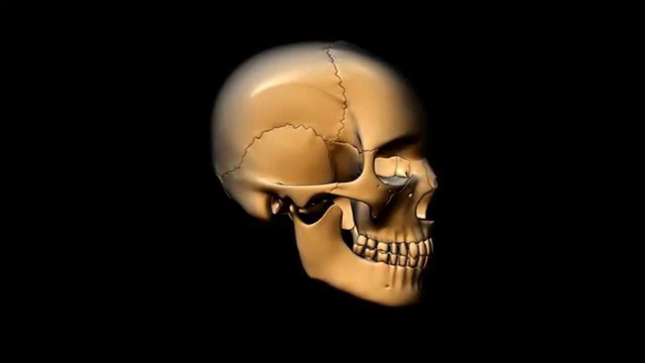 Royalty Free Medical Human Skull HD Footage - Metal Skull ... X Ray Skull 4 Views