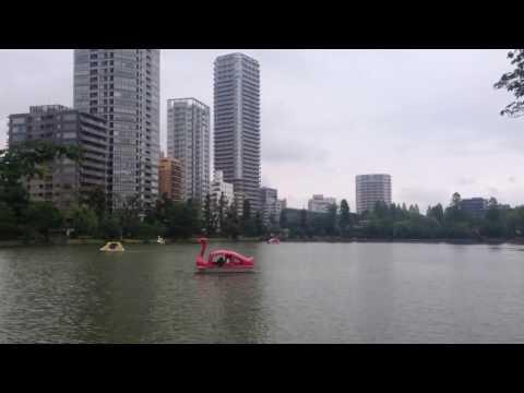 Swan Boats in Tokyo