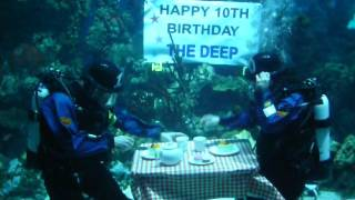 Underwater tea party. The Deep Hull celebrates 10th birthday