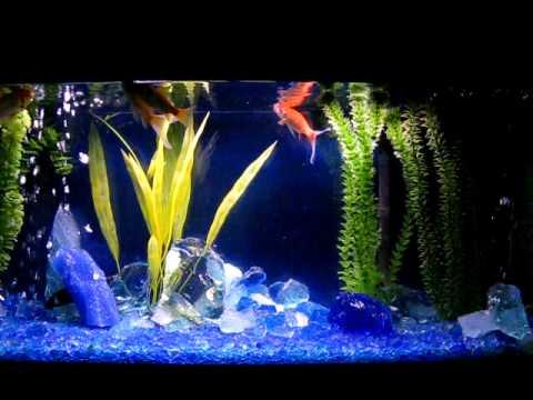 Tumbled Recycled Glass Aquarium Gravel Youtube