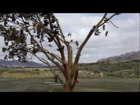 Shoe Tree near Reno, NV + Susanville, CA on CA 395