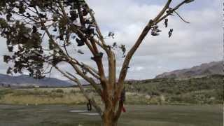 Shoe Tree near Reno, NV + Susanville, CA on CA 395