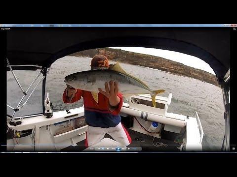 Downrigging For Sydney Kingfish 2014