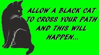 ALLOW A BLACK CAT TO CROSS YOUR PATH AND THIS WILL HAPPEN...