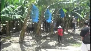 CR du voyage d'études au Surinam