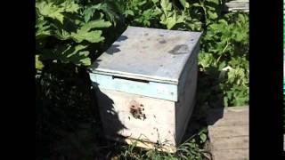улей для начинающего пчеловода - какой выбрать ?(, 2016-03-19T09:07:37.000Z)