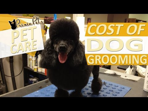 Cost of Dog Grooming Services - Average Prices