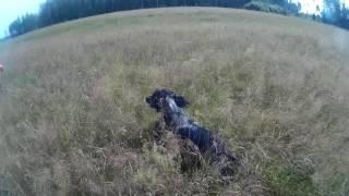Кабир в поле
