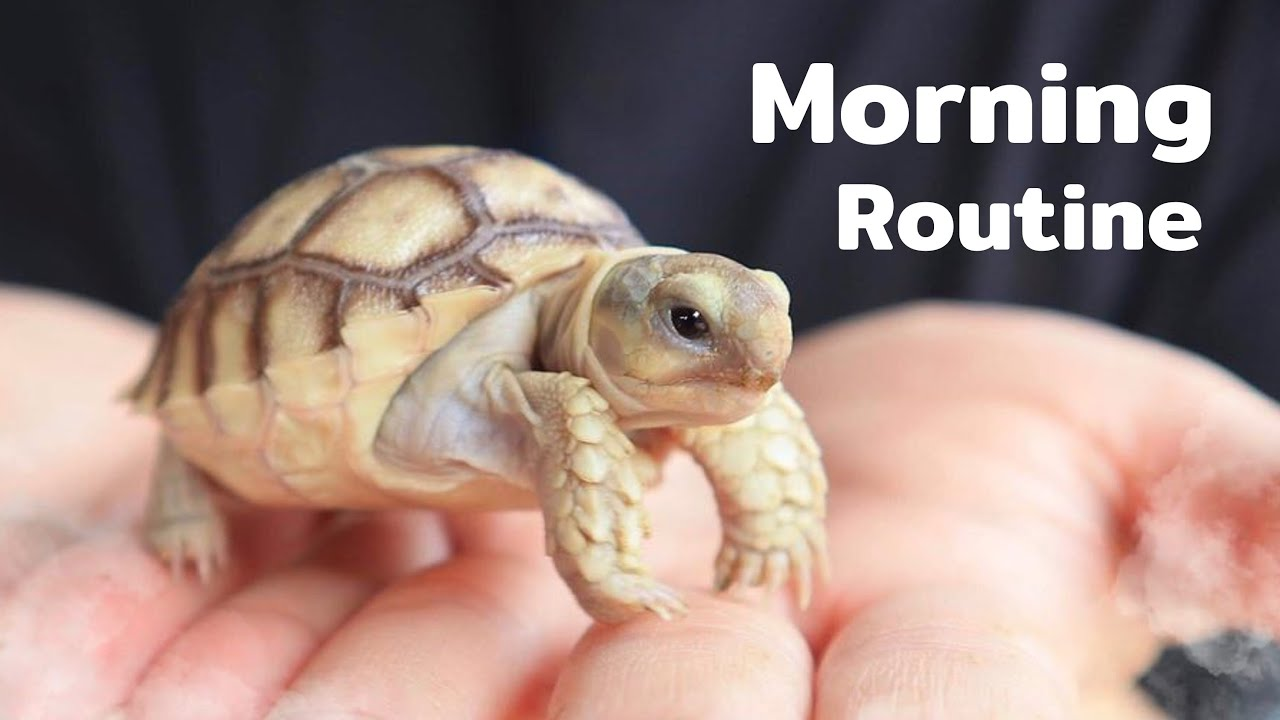 Download MY TORTOISE'S MORNING ROUTINE