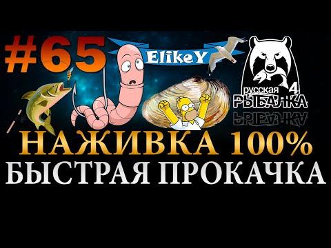 Наживка 100% • Быстрая прокачка! • Какие секреты? • Цена вопроса? Легко! • Русская Рыбалка 4 #65