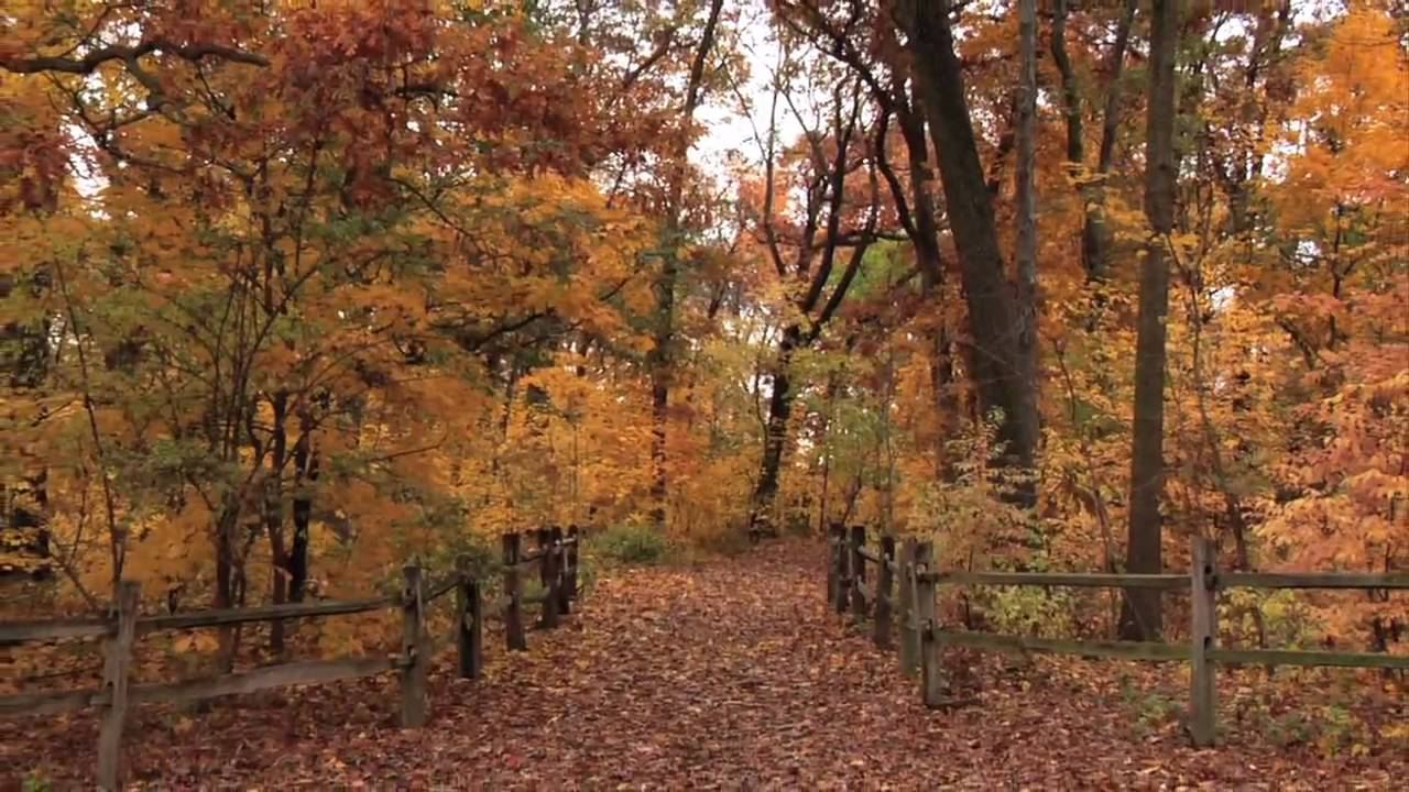 Fall Foliage at The New York Botanical Garden 2009 - YouTube