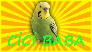 Muhabbet Kuşu Ve  Papağan Cİcİ Baba  Konuşma Eğitim Sesi Hazır Ses Kaydı 1 Saat