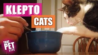 Klepto Cats! 😼😂   Try Not to Laugh Challenge