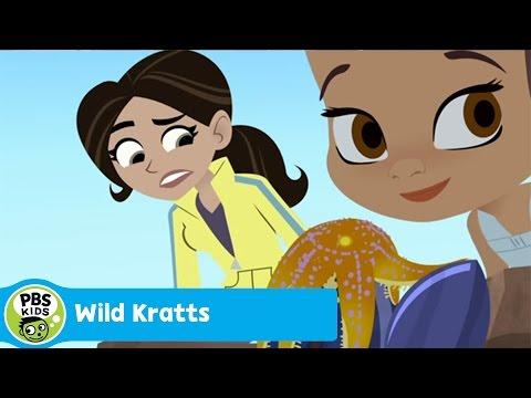 WILD KRATTS   Barnacle Powers   PBS KIDS