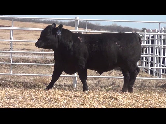 Express Ranches Lot 393