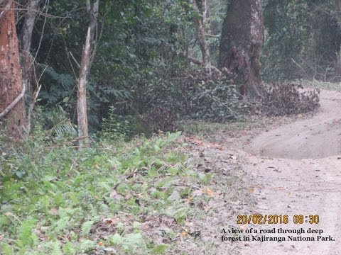 A road journey to Jorhat   a tour down the memory lane
