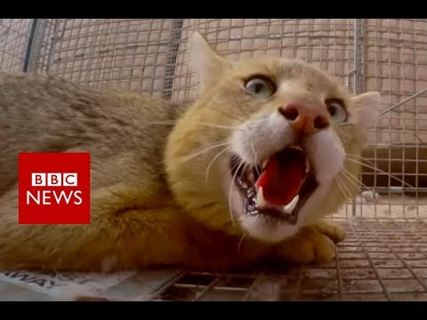 The pest controller of Kandahar - BBC News