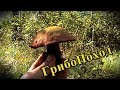 ГрибоПоход. Лесная жизнь Старобердянского лесничества