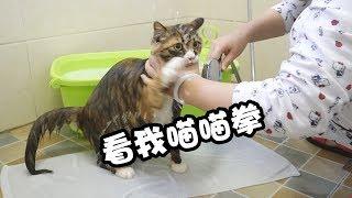 暴躁流浪猫到家半年第一次洗澡好担心会把屋顶掀翻呀