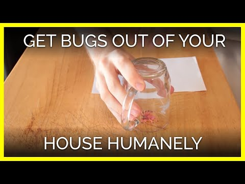 Escort Mr  or Ms  Bug out of Your House Humanely | PETA