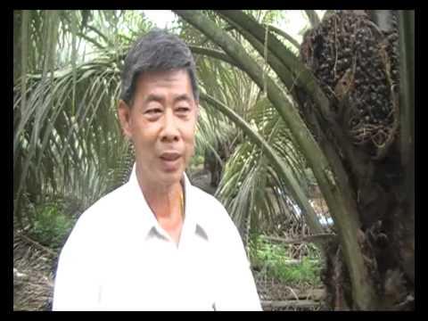 Bio Fertilizer for Oil Palm in Yong Peng Malaysia