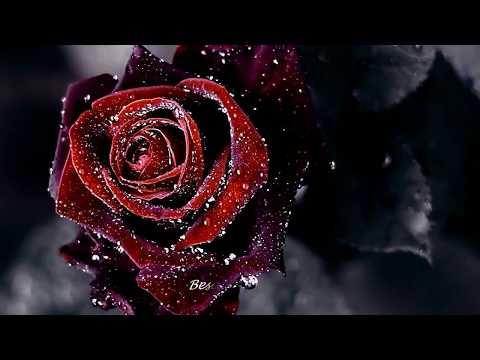 Besame Mucho | English lyric | Dean Martin | Yêu Nhau Đi