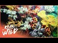 Investigating Cold Water Reefs | Alien Reefs | Wild Things Shorts