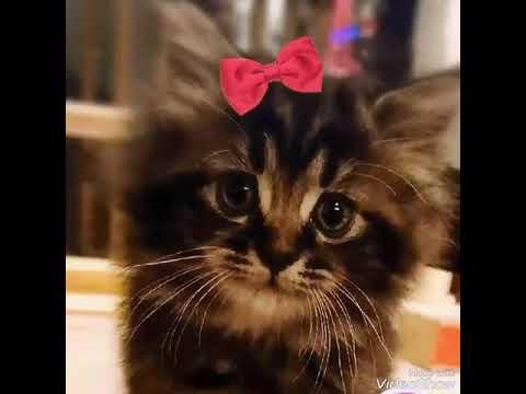 岡山猫カフェ猫茶 おしゃべりペット使ってみた - YouTube