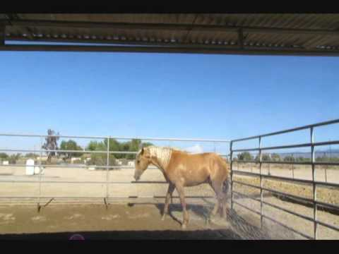 Malibu - BLM Mustang - Day 6