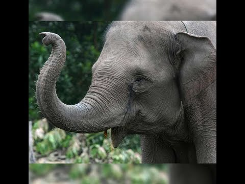 Qatar Airways assures Wildlife Dept. to transport elephant from abroad