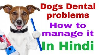 Dogs Dental Care In Hindi