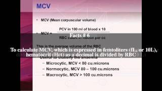 Mean corpuscular volume Top # 13 Facts