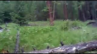 Охота на медведя!!!