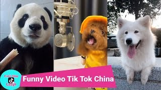 Tik Tok China : Funny Animals video in Tik Tok China/Douyin/Episode 1