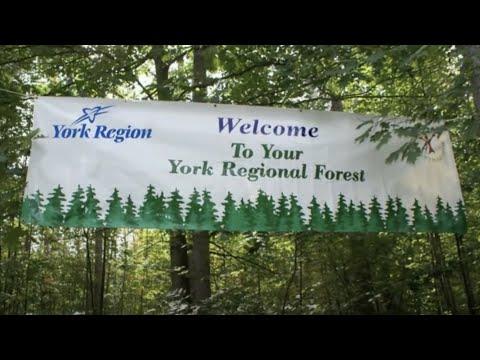 York Regional Forest | York Region