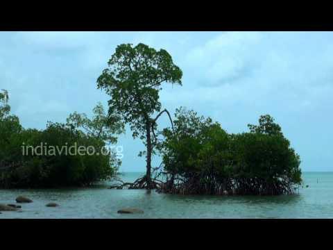 Fishing in Mayabunder, Andaman and Nicobar Islands