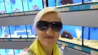 В Америку завезли Русских черепах-мои покупки!
